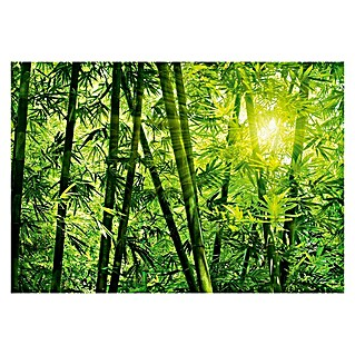 Fotomural Bamboo Forest (366 x 254 cm, Papel)(366 x 254 cm, Papel)