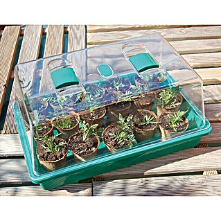 Nortene Mini invernadero Rapid Grow (L x An: 34 x 24 cm)(L x An: 34 x 24 cm)