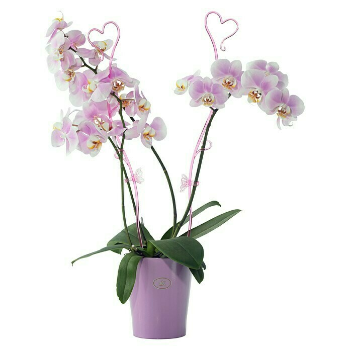 ORCHIDEENCLIP ROSA  2ER-PACK