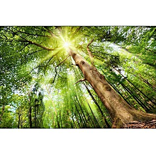 ProArt Young Living Decopanel (Glow in the wood, 115 x 75 cm)(Glow in the wood, 115 x 75 cm)